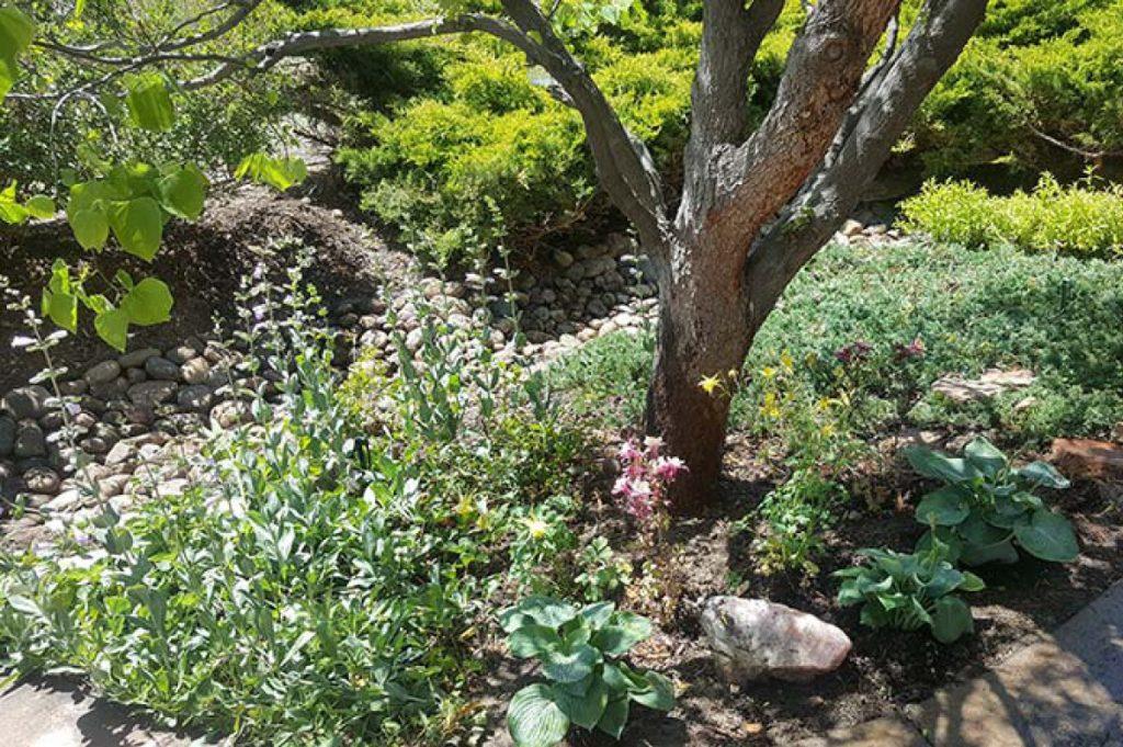 Don King Landscaping